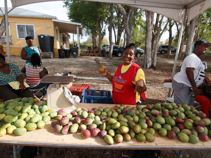 For fans of the juicy fruit, mark your calendar for the Mango Festival in July in Christian Valley; a fruit forest in the Sherkerley Mountains on the south coast. Photo Credit Justin Peters, Antigua Barbuda Tourism Authority