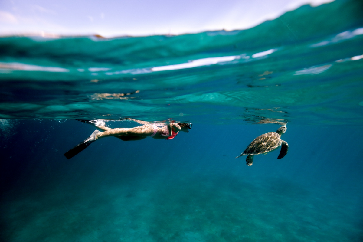 STTFR-47 Snorkeling With Turtles